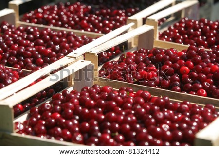 Lots of fresh red cherries packed in boxes - stock photo