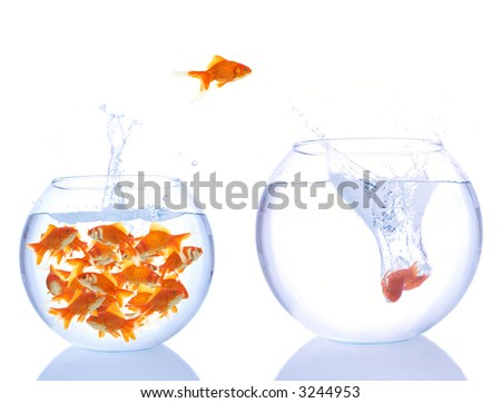 lots of goldfishes in a small bowl, and some are jumping for a better place