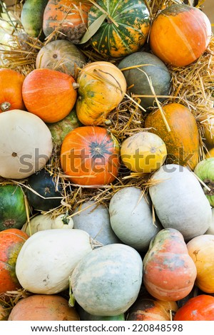Lots of pumpkins and squash lying on hay - stock photo