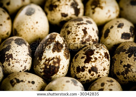 Lots of quail eggs.