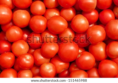 Lots of ripe red tomatoes in the sunlight close up - stock photo