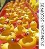 lots of rubber ducks floating along - stock photo