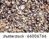 Lots of small seashells as an abstract textured background. - stock photo