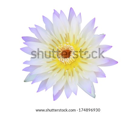 lotus flower blossom on isolate background - stock photo