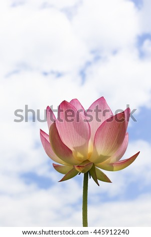 Lotus flower is looking to the sky