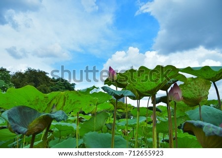 Lotus flower very meaningful buddhism describe stock photo royalty lotus flower is very meaningful in buddhism it describe about human behaviors and mind mightylinksfo