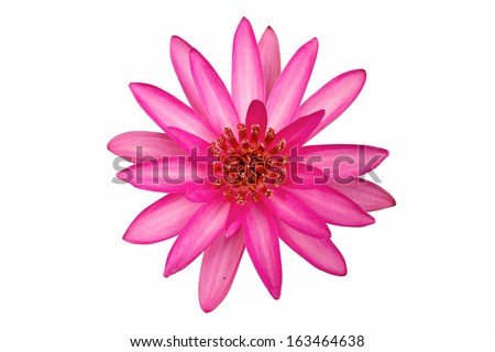 Lotus flower. isolate on white background. - stock photo