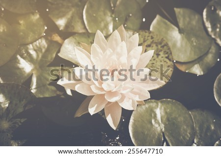 Lotus Flower on Lily Pad in Retro Vintage Instagram Style - stock photo