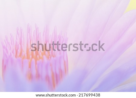 lotus flower on pastel tones - stock photo