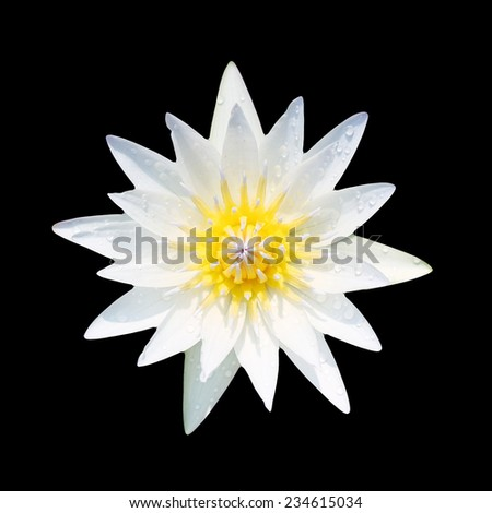 Lotus flower  with black background. - stock photo