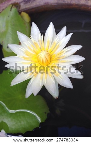 lotus flower  with mobile phone