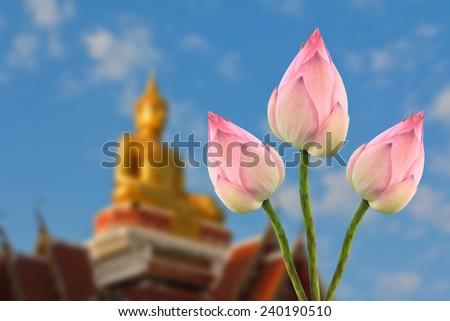 lotus for Buddhist religious ceremony - stock photo