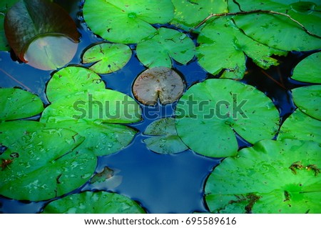https://thumb1.shutterstock.com/display_pic_with_logo/167494286/695589616/stock-photo-lotus-in-pond-at-garden-695589616.jpg