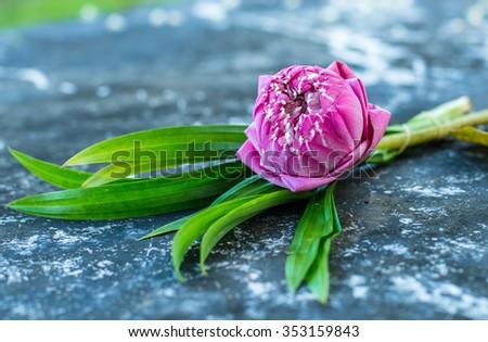 Lotus National Flower Vietnam Egypt Vast Stock Photo 353159843