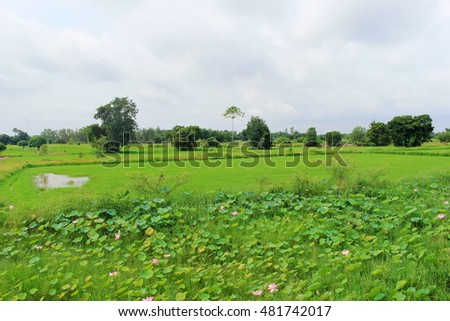 lotus leaf lotus flower pond sky