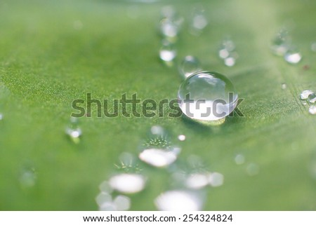 Lotus leaf with water drops effect green, drops of dew on a green grass - stock photo