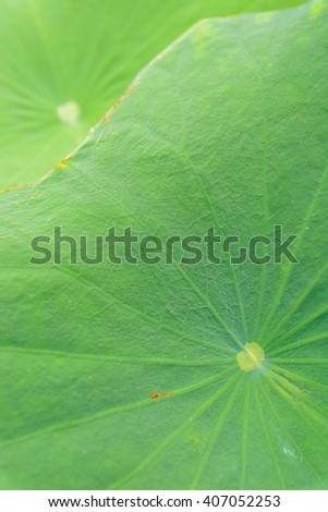 lotus leaves(selective focus)