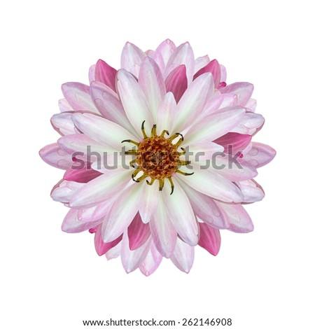 lotus on isolate white background - stock photo