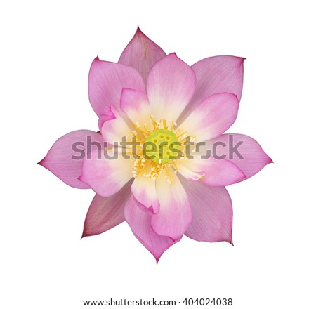 lotus on isolated white background. - stock photo