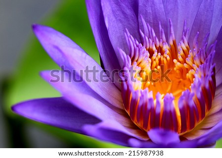 Lotus on the underneath of the sun sparkling statement sent to hunt to get to know the beauty that lie ahead.