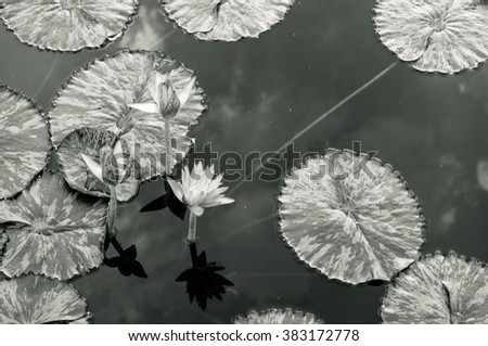 Lotus pond with reflections of clouds - stock photo