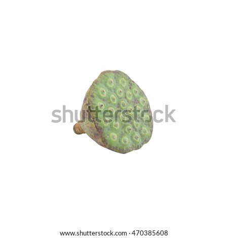 Lotus seed pods isolated on white