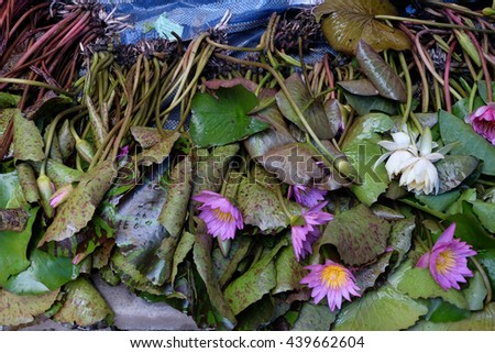 Lotus sold in the Thai market. - stock photo