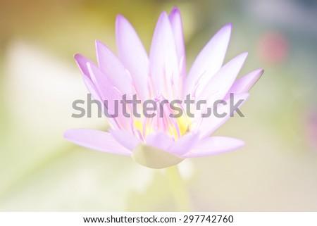 Lotus vintage style soft focus background. - stock photo