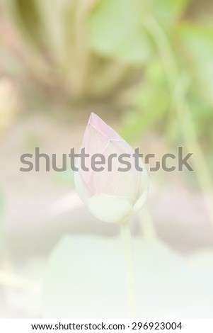 Lotus vintage style soft focus for background - stock photo
