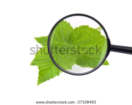 Loupe and green leaves against white background - stock photo