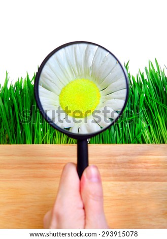 Loupe in a Hand on the Flower Isolated on the White Background - stock photo