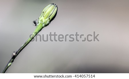 Louse on green stem