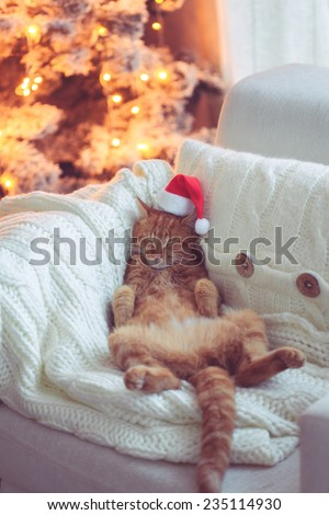 Lovable ginger cat wearing Santa Claus hat sleeping on chair near Christmas tree at home - stock photo
