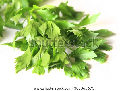 lovage plant as very nice natural food background