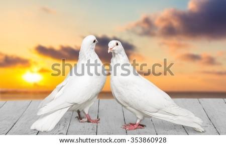 Love. - stock photo