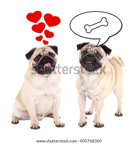 love and relationship concept - two cute pug dogs over white background - stock photo