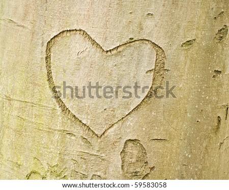 Love forever. Heart shape on tree bark - stock photo