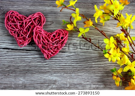 Love pink hearts on wooden background with Laburnum blossom - love card, valentine card, mothers day card, fathers day card - love background - space for text - stock photo