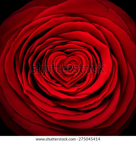 Love rose concept as a red flower design element shaped as a circle with a heart shape inside as a symbol and icon for valentines desire or mothers day expression of affection or wedding passion. - stock photo