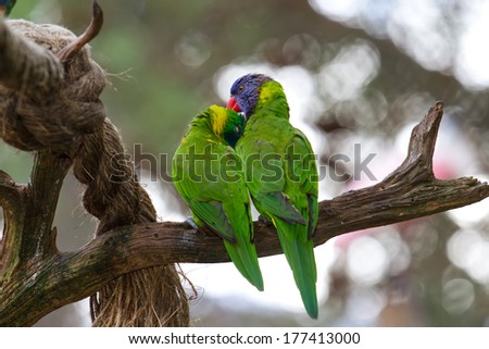 Lovebirds perched together on a branch - stock photo