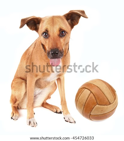 Lovely adopted mongrel dog with ball for soccer pet toy