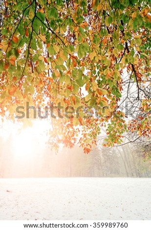Lovely autumn branches with bright colorful leaves. Snow under the ground. Trees. Winter and autumn. Spectacular view. - stock photo