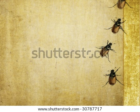 lovely background image with close-up of beetles. very useful design element.