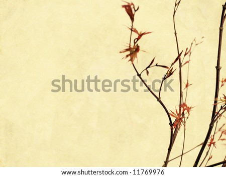lovely background image with interesting texture, close-up of tree branches and plenty of space for text