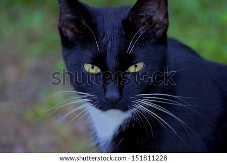 lovely black cat - stock photo