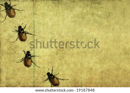 lovely brown background image with interesting texture and little beetles
