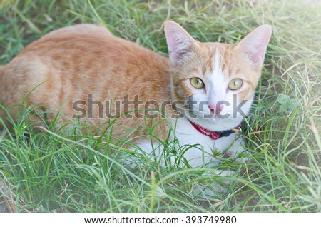 Lovely cat laying in a tall grass - stock photo