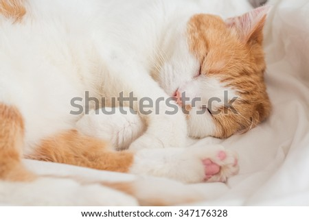 lovely cat lie in bed. soft light. color effects. - stock photo