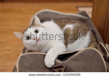 Lovely cat lying on the traveling bag - stock photo