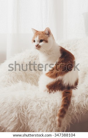 lovely cat sitting on white furry chair in morning light on window background. - stock photo